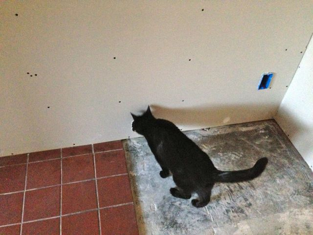Spirit kitty is doing her own inspection of the work.