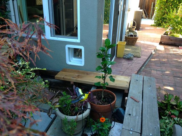 Cat door leading to the kitty garden.