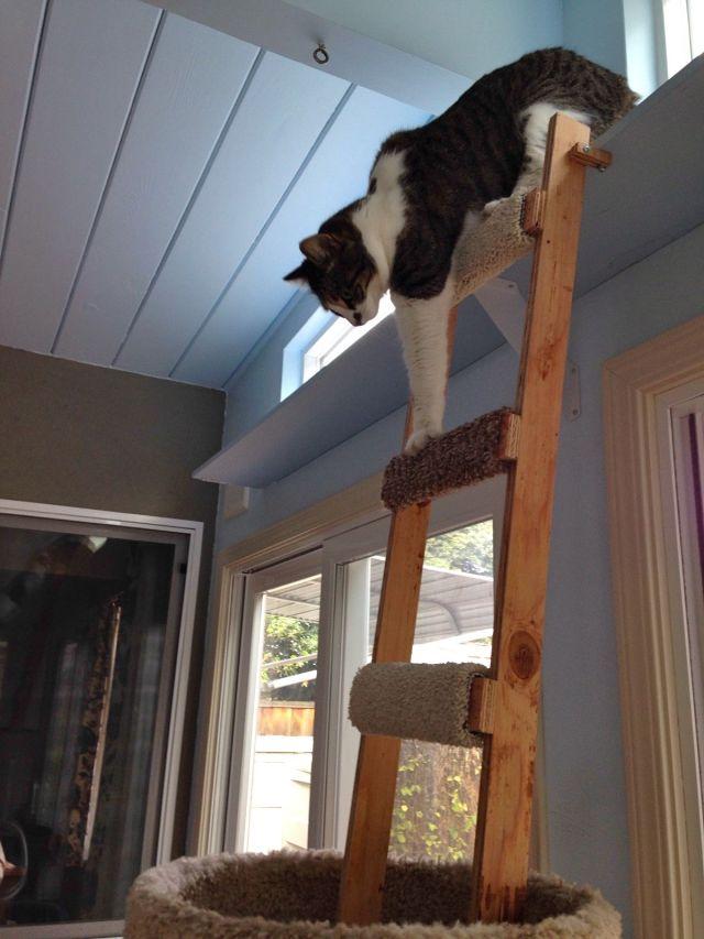 Miss Spot climbing down.