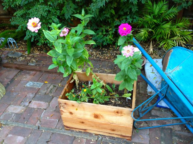 Example of the planter boxes that will go in the cage. There will be 9-12 of these. We're going to do a combination of flowers and some vegetables.