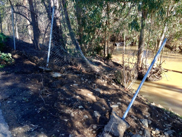 and this is where the fence went - downstream and wrapped around some trees.